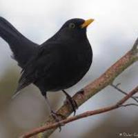 A madarak és az emberek közös kifejezési génjei