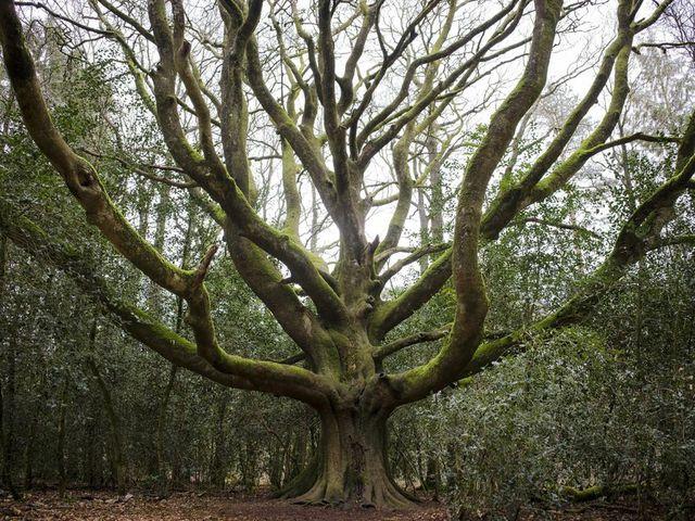 A fák titkos életéről