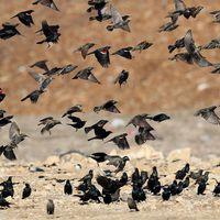 Agresszívvá válnak a madarak Amerikában