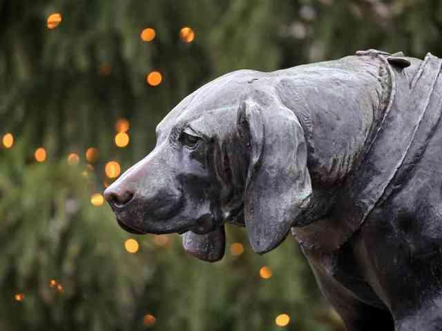 Ne hagyjuk magára kutyánkat élete utolsó pillanatában!