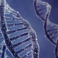 Személyre szóló diéta DNS alapján