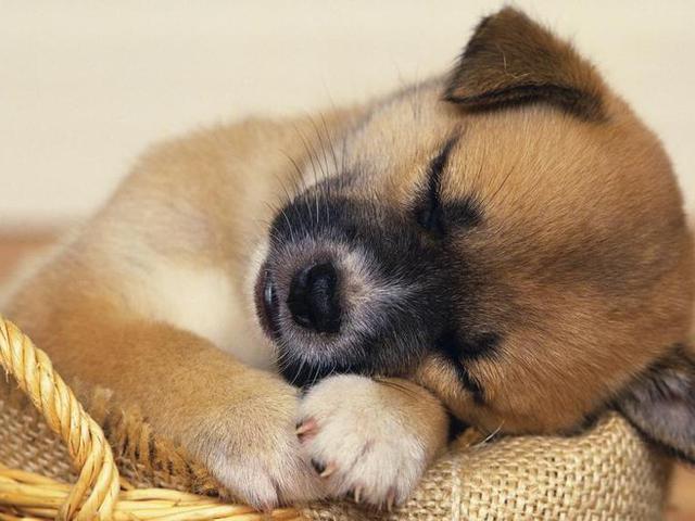 Miről álmodnak a háziállatok?