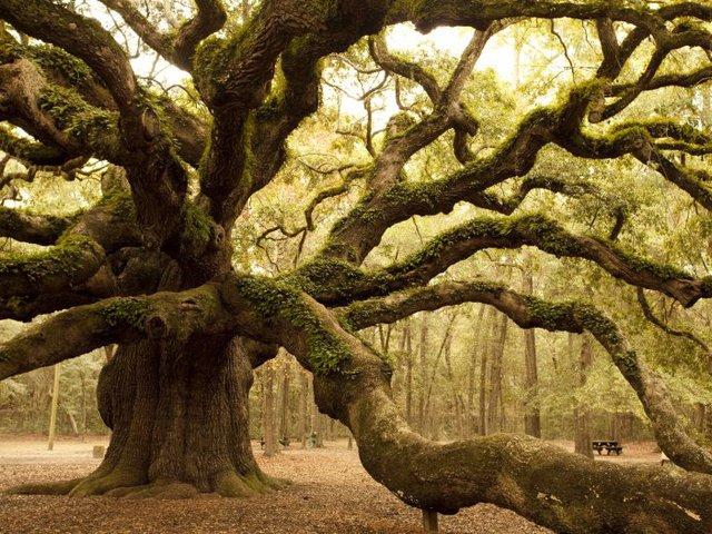 """A fák is """"emberi lények"""""""