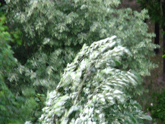 Fák a viharban