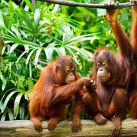 Meg lehet-e érteni az állatok nyelvét?