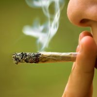 Hová vezet a marihuána rekreatív célú felhasználása?