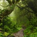 90 millió éves esőerdő a Dél-sarkon