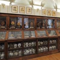 Nyitva marad-e a torinói Lombroso-múzeum?