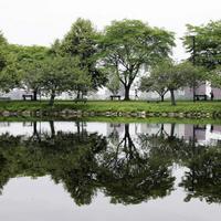 Térkép a nagyvárosok fáiról