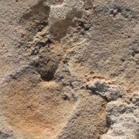 5,7 millió éves emberi lábnyom Krétán