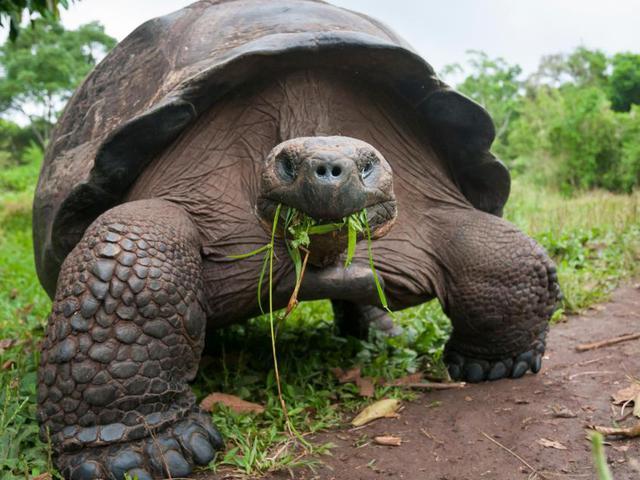 Pusztulnak a teknősök és ez rossz hír az emberiségnek