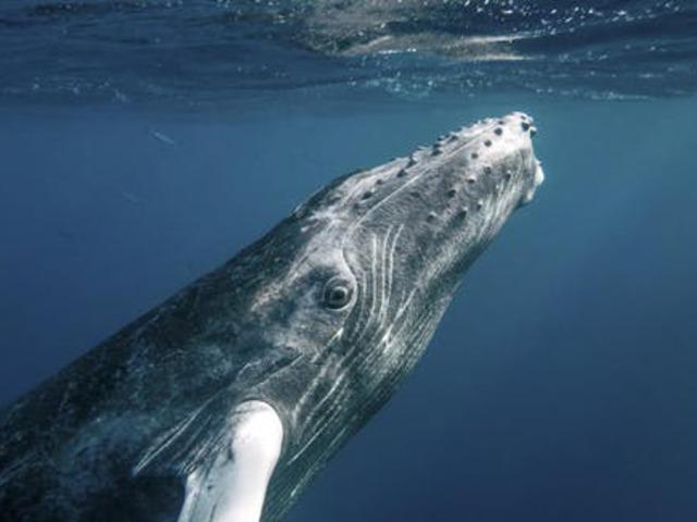 A bálnák a zajban nem énekelnek