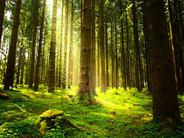 A fák Nyugatra tartanak
