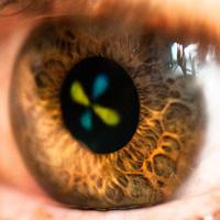 Hatodik érzékünkkel látjuk a polarizált fényt