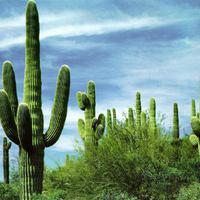 A kaktusz hozza a forradalmat az elektromos autóknak