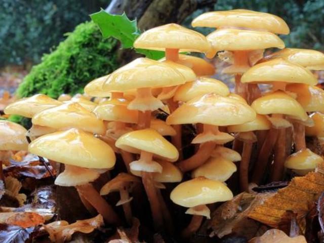 A gombák titkai