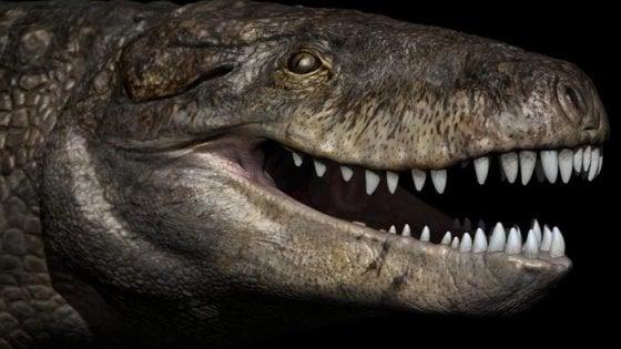 Krokodil a Jura-korból