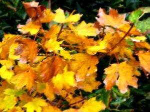 Les feuilles mortes 003