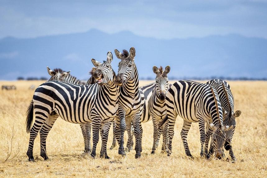 210414_zebra_1.jpg