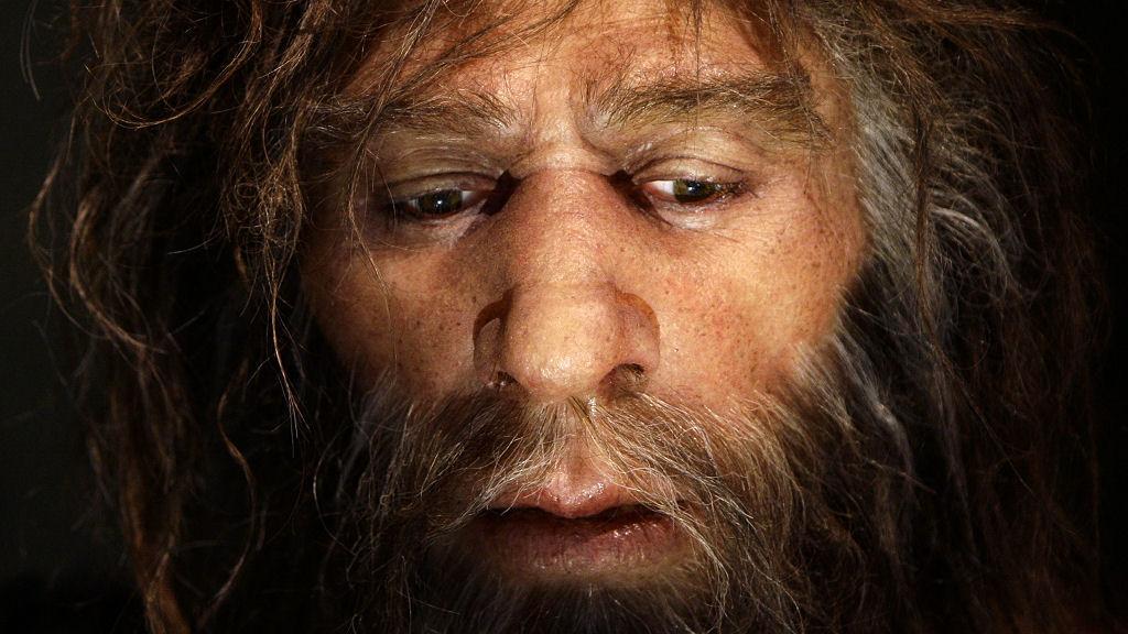 31_neanderthal_r_w.jpg