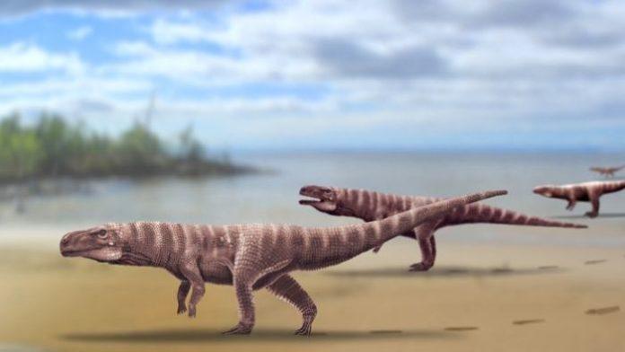 Amikor a krokodilok két  lábon jártak