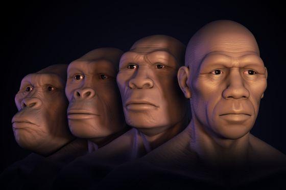 Az emberi arc születése