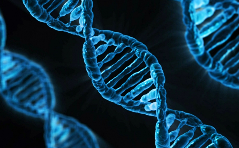 embrioni-geneticamente-modificati.jpeg