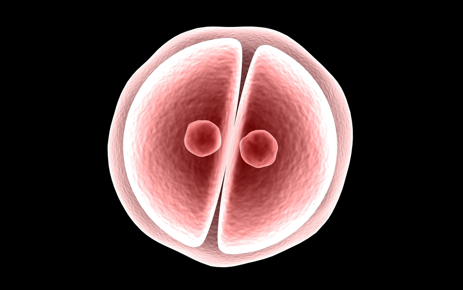 embryo.png