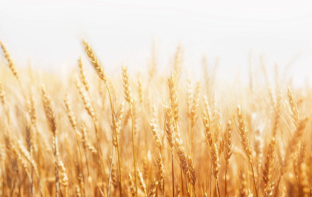 grano-commodities-1024x648.jpg