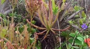 Húsevő növény felfedezése a Facebook által