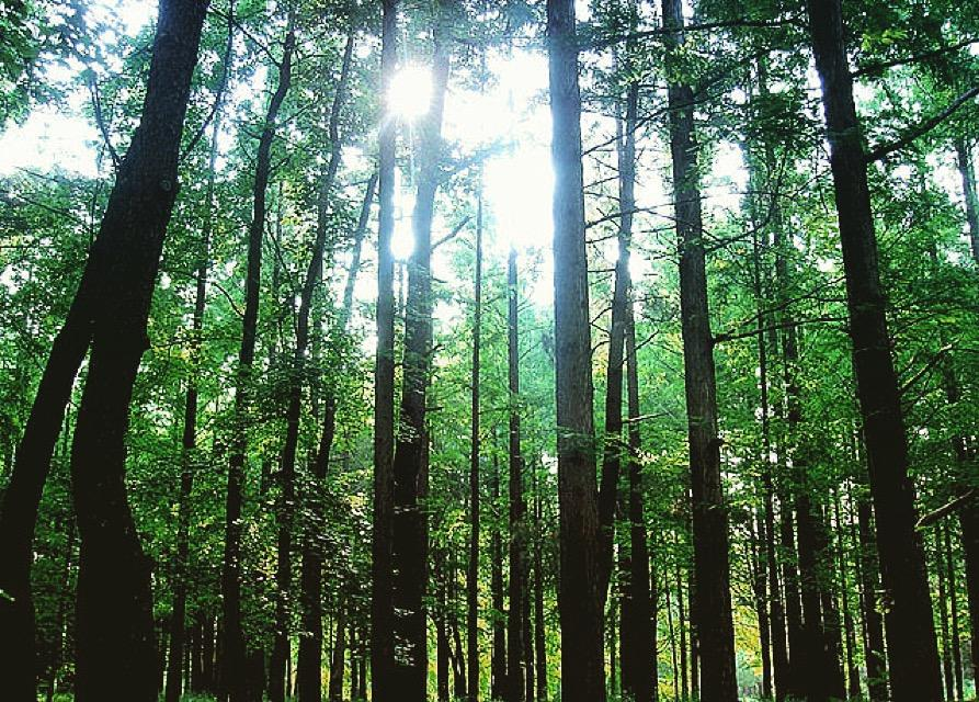 Az erdő segít kikerülni a válságból