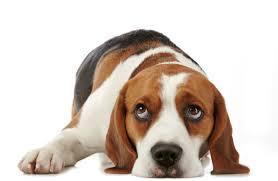 Kutya-féltékenység