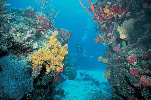 mesoamerican_barrier_reef_in_belize_thumb_2.jpg