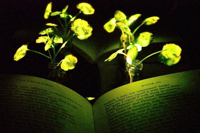 A jövőben olvashatunk a növények fényénél