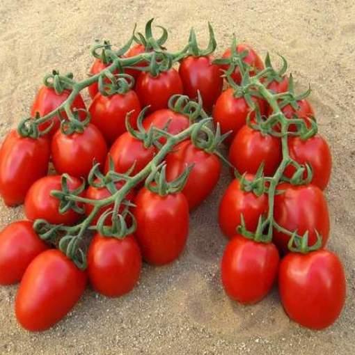 pomodoro-da-appendere-vesuviano-piccadilly-f1.jpg