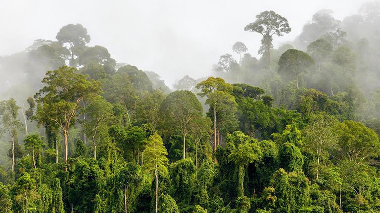 rainforest-connection.jpg