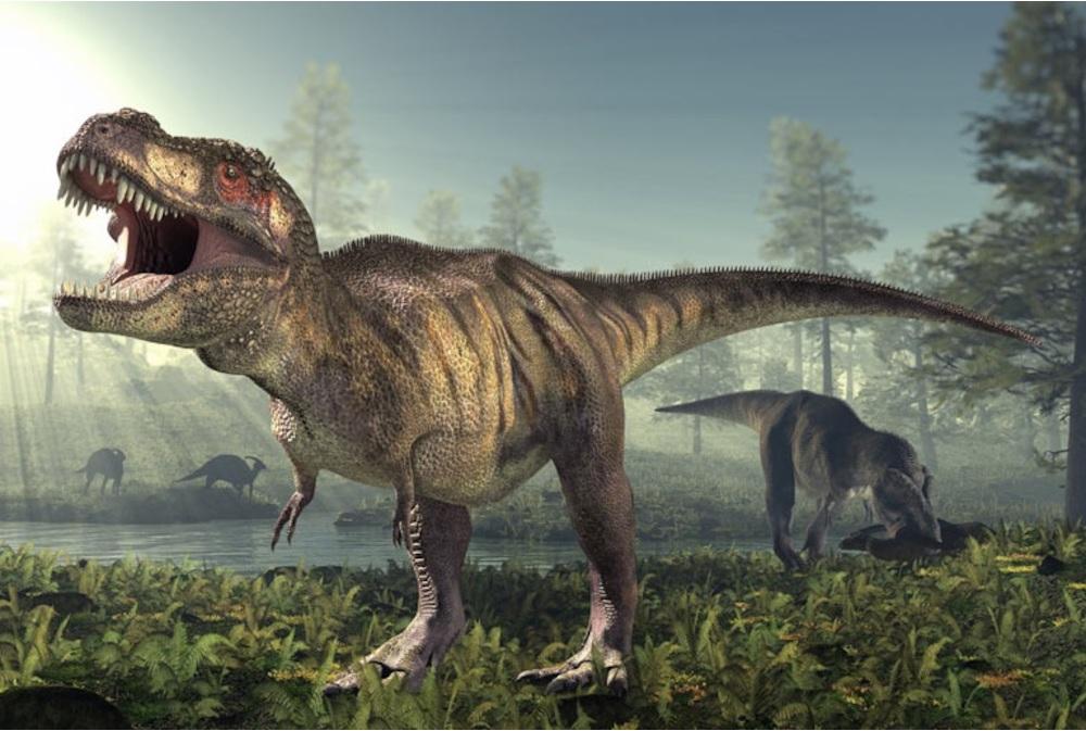 t-rex-2-469-xl.jpg