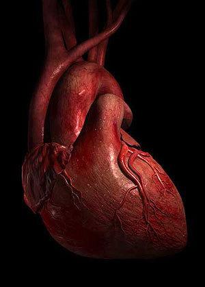 A szív, mint azonosító