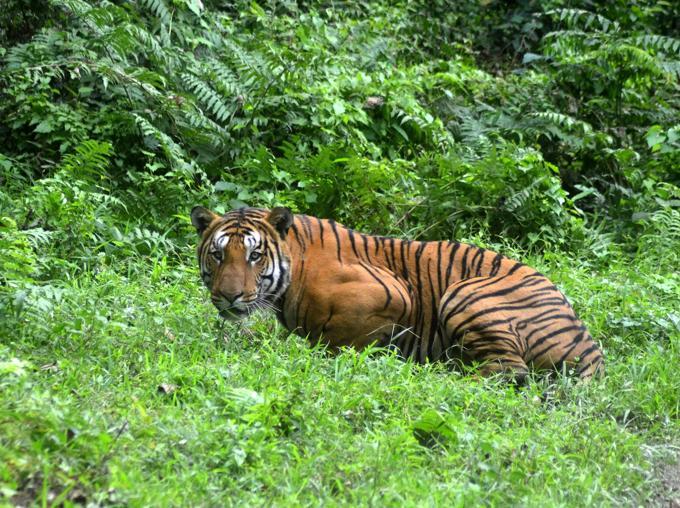 tigris_1.jpg