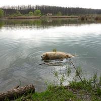 Domonyi tó
