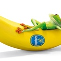 Hol nyílik a banán?