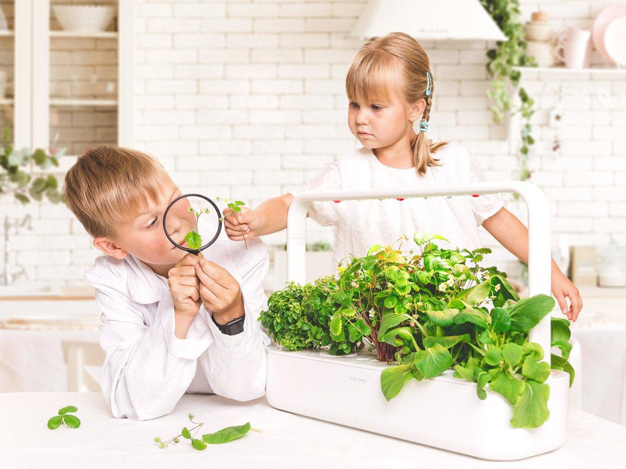 Az idei Karácsony 5 legtrendibb szobanövény újdonsága