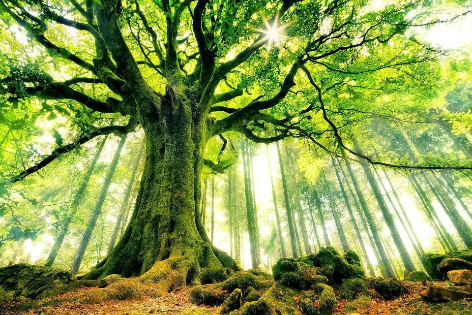 mother-earth-tree.jpg