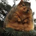 Mit gondol a Bíróság a kóros elhízásról?