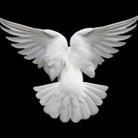 Keresztség a Szellemben - 5. rész