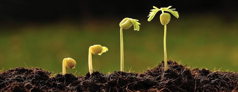 grow-786x305.jpg