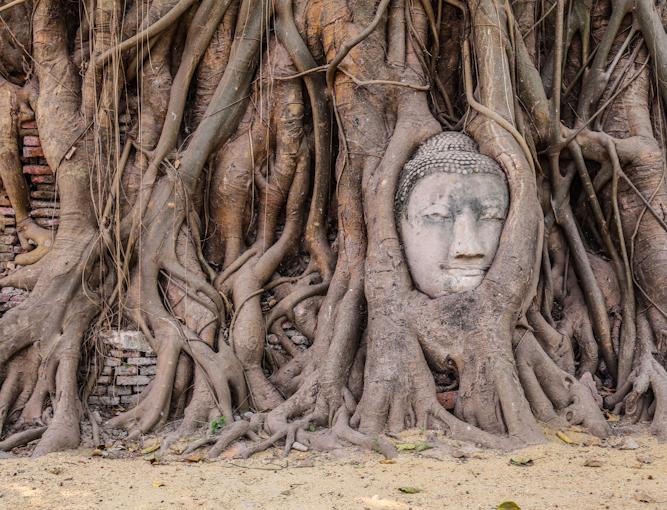 Ayutthaya: a kő Buddha-fej, amely a burmaiak 1767-es támadásánál került a földre és a fa gyökerei körbenőtték és egyre magasabbra emelik.