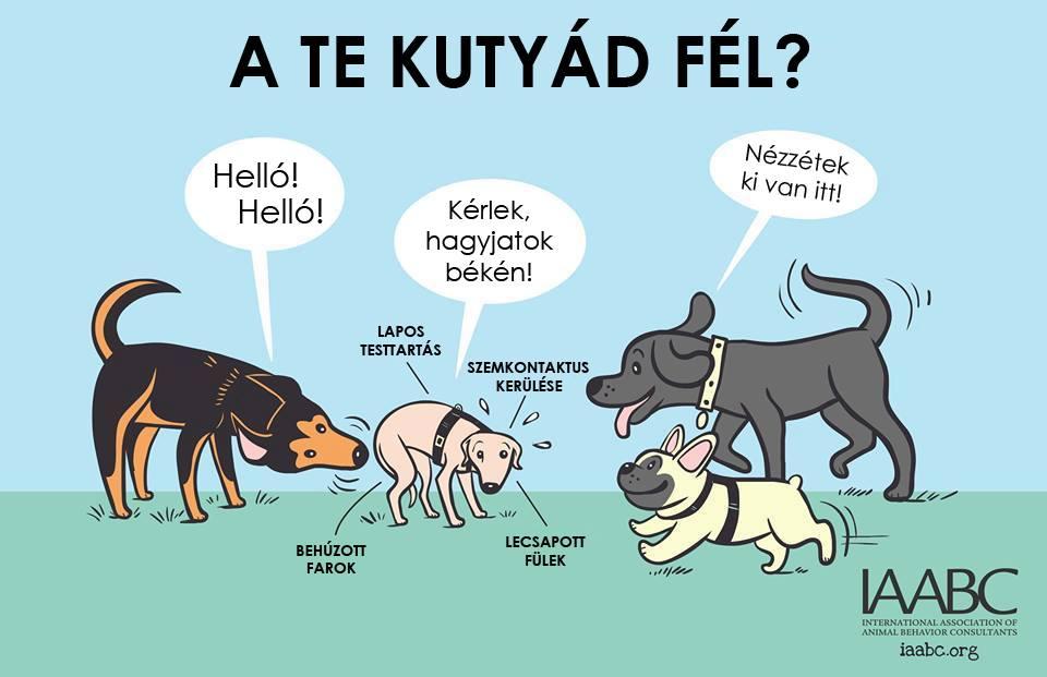kutyas1.jpg