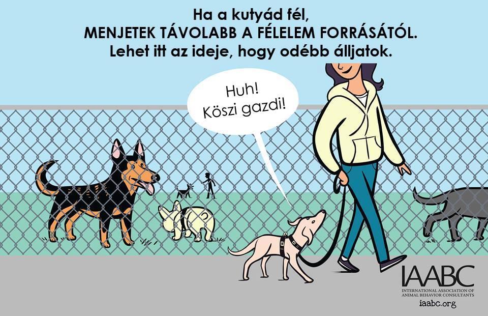 kutyas2.jpg