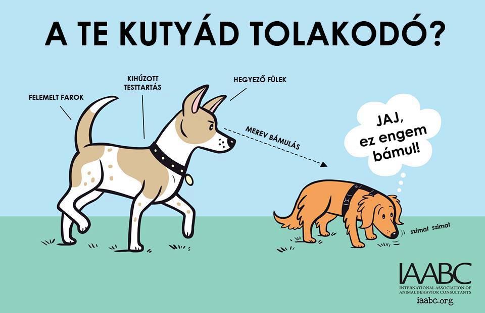 kutyas3.jpg